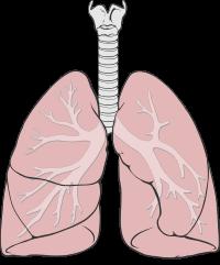 Vyšší hladina folátů znamená lepší plicní funkce u mužů s CHOPN
